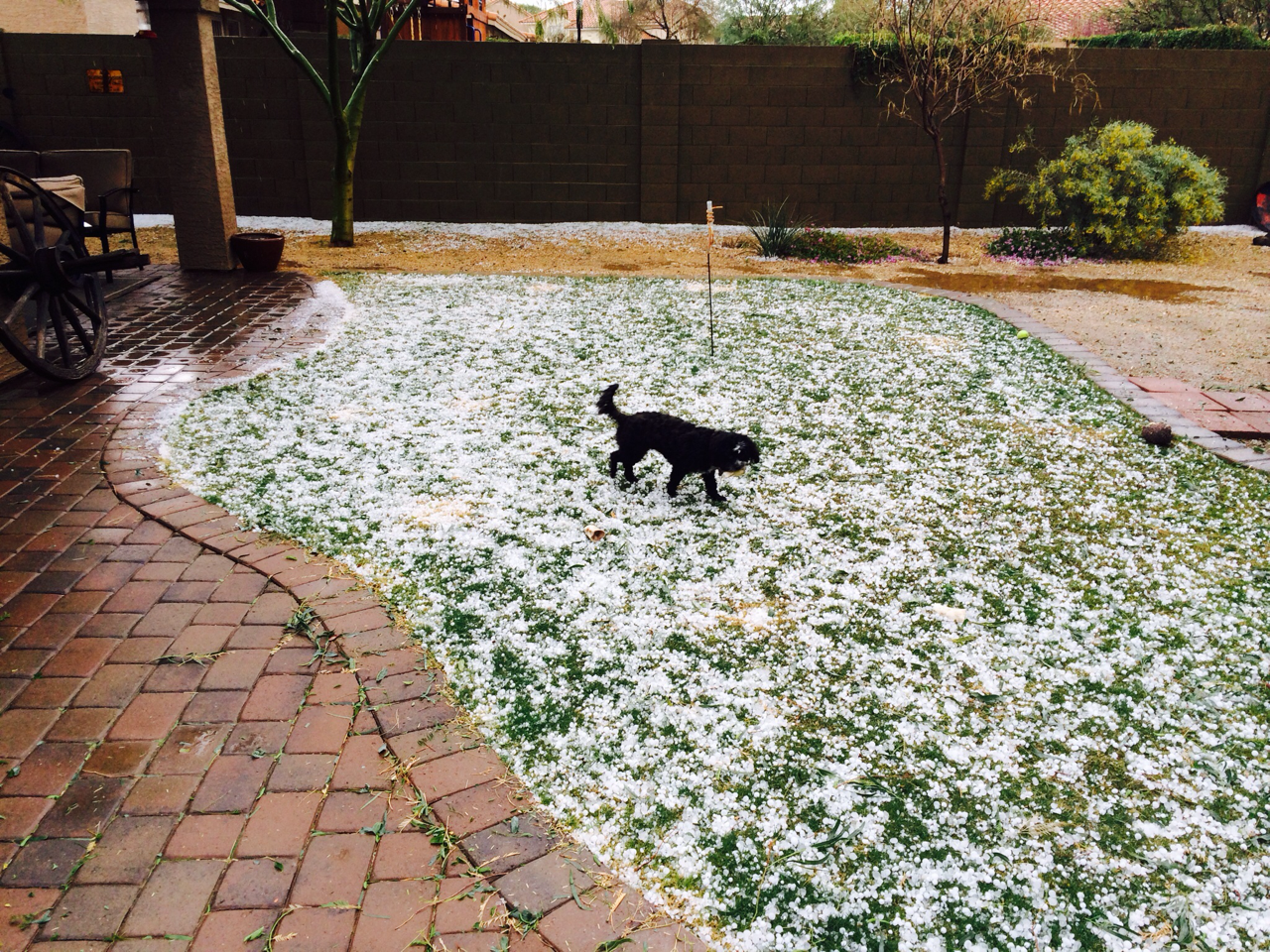 Hail at Tatum Ranch (CBS 5 News viewer)