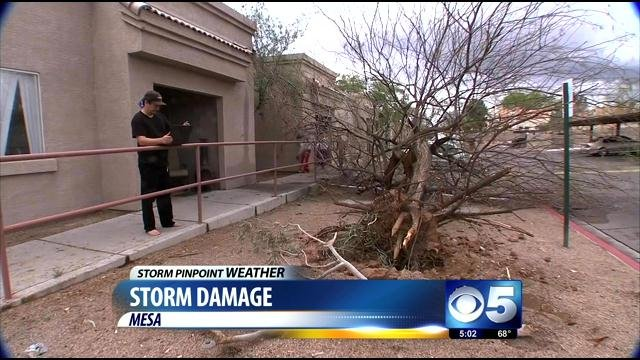 Tree uprooted as a small tornado swirls through complex. (Source: CBS 5 News)