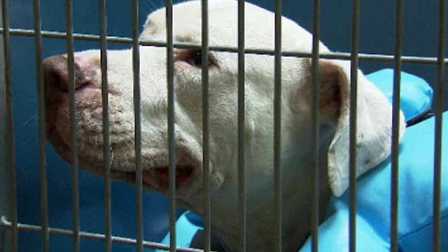 Mickey's fate will be decided by a judge Tuesday. (Source: CBS 5 News)