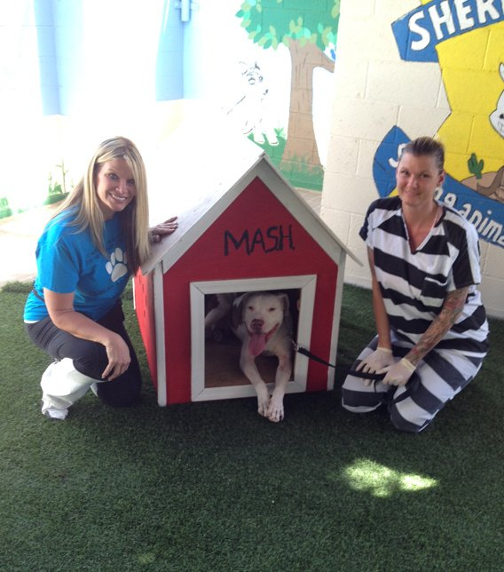 Mickey was sentenced to life behind bars in Arpaio's no-kill shelter. (Source: CBS 5 News)