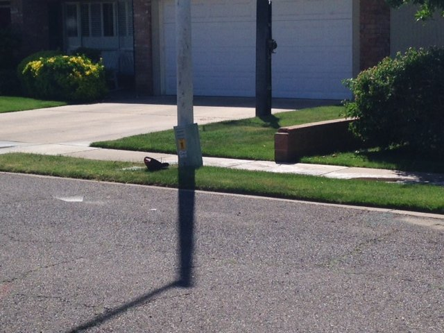 One man was stung multiple times in the face. (Source: Christina Batson, cbs5az.com)