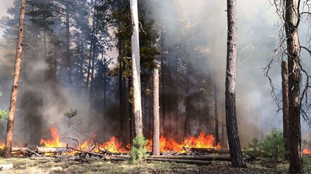 The Secret Fire has devoured 6 acres since it was first reported Saturday morning.(Source: Coconino National Forest)