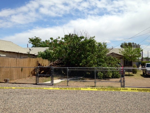 A sharp cold front stirred up strong winds that toppled trees and power lines. (Source: CBS 5 News)