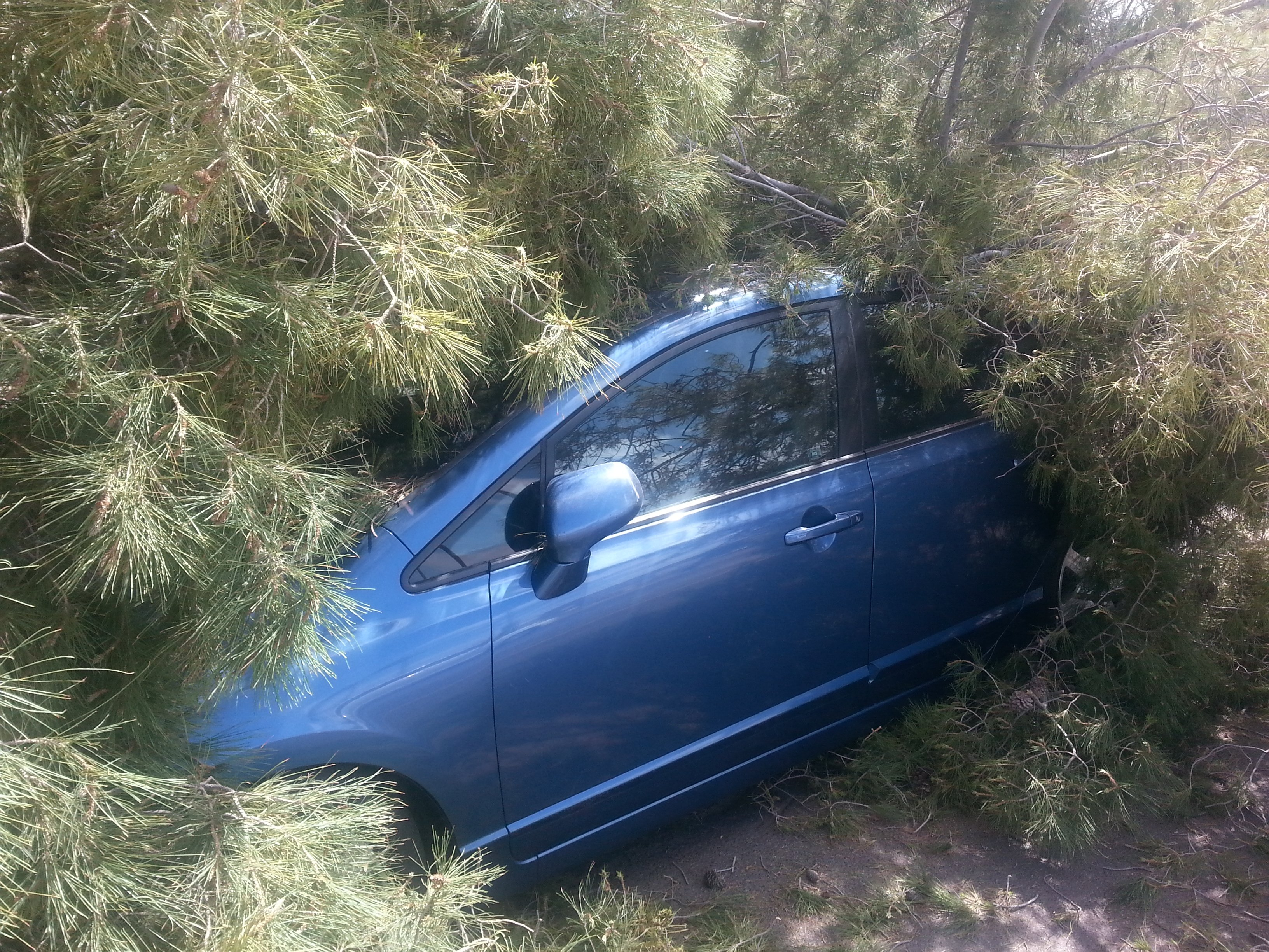 One motorist was in for a big surprise. (Source: Shawn Kline, cbs5az.com)
