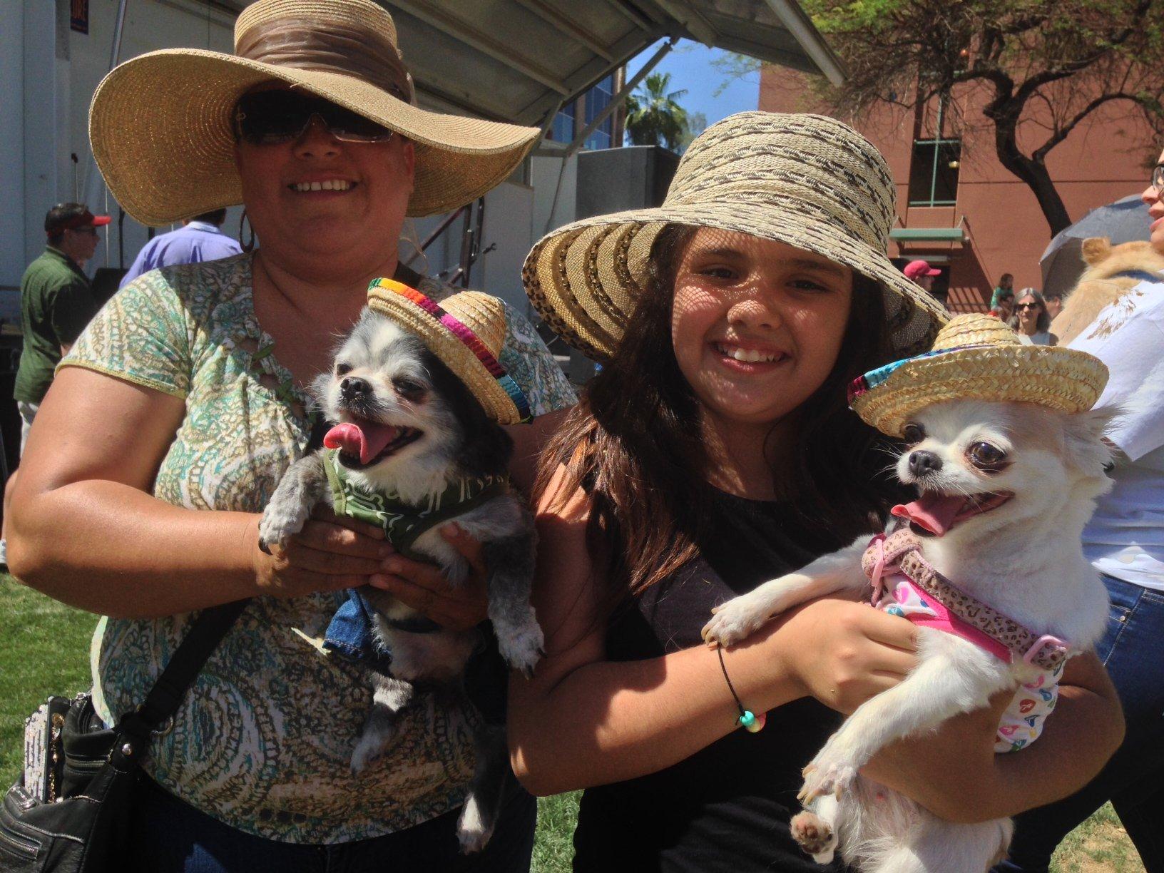 Benito (left) and Rainy join other Chihuahuas at a Chandler Cinco de Mayo celebration Saturday. (Source: Christina Batson, cbs5az.com)