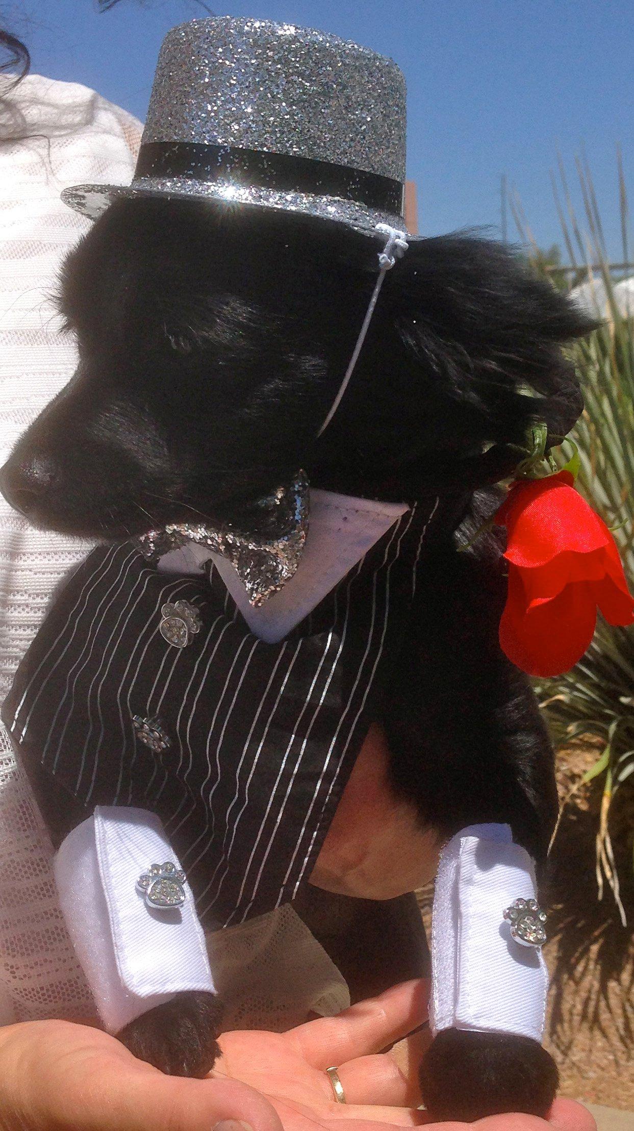 Joyce's dog, Max II, won the race (Source: Joyce)