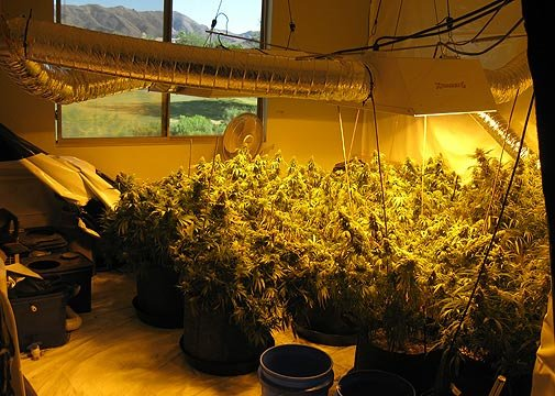 This pot growing operation was found at an Awhatukee home Tuesday morning.