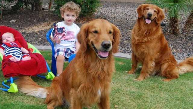 Parker and Sherman belong to the Gillette family and are two of the dogs that died in a Gilbert boarding facility last week. (Source: Shannon Gillette)