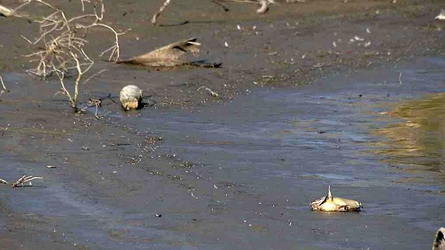 Many fish were found dead in the bed of the lake after the water level fell. (Source: CBS 5 News)