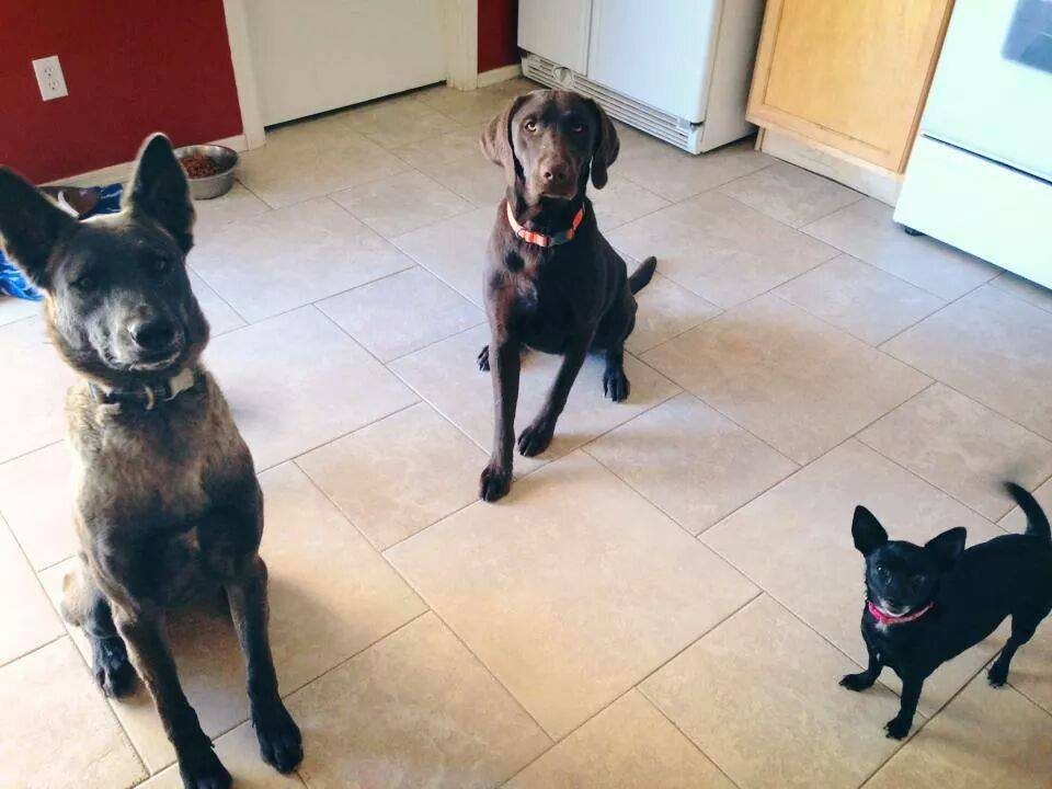 Valor, left, and Remington, center (Courtesy: Heather Wicker)