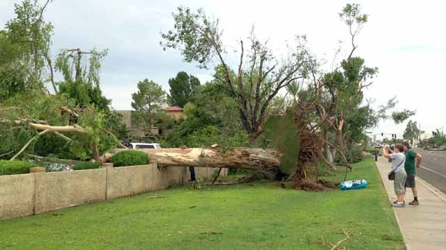 Trees uprooted in Phoenix. (Source: Christina Batson, cbs5az.com)