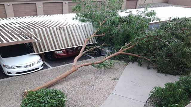 A tree crashed down on a carport near 32nd and Thunderbird Road. (Source: Nicole Quenga)