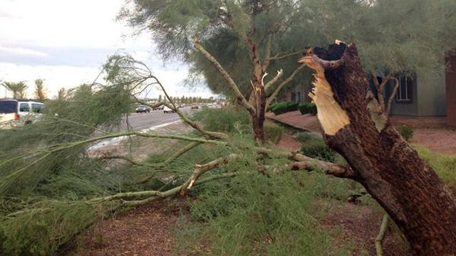 Powerful winds snapped trees in half near Rio Salado and Dobson Sunday evening. (Source: Allyson Blair, cbs5az.com)