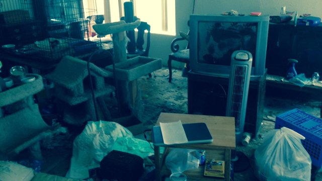 A MCSO investigator said there was 2 feet of feces in the home. (Source: Maricopa County Sheriff's Office)