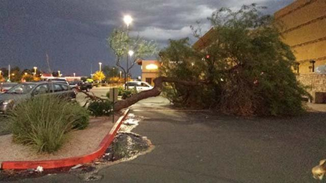 The storm in North Phoenix blew down a tree at Seventh Street and Bell Road. (Source: Elizabeth Taecher)