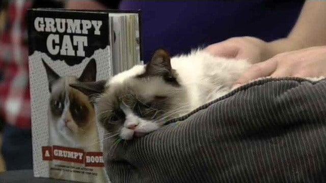 """Grumpy Cat's new book, """"Grumpy Cat: A Grumpy Book,"""" is a New York Times bestseller. (Source: CBS 5 News)"""