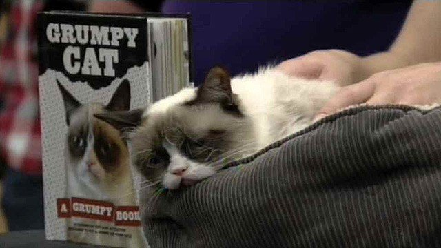 "Grumpy Cat's new book, ""Grumpy Cat: A Grumpy Book,"" is a New York Times bestseller. (Source: CBS 5 News)"