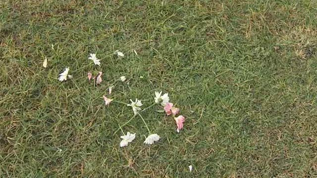 These flowers are the only things that mark the grave of Cathy Lang in a Mesa cemetery. That will soon change when a headstone is placed there. (Source: CBS 5 News)
