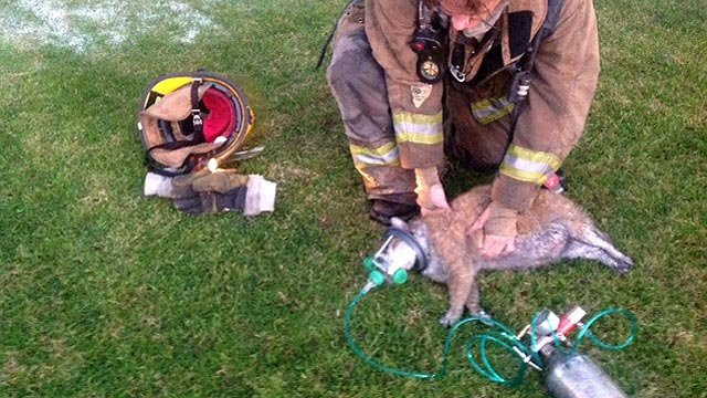 A Phoenix firefighter uses a Fido bag to help resuscitate one of six pets found in a condo fire Sunday. (Source: Phoenix Fire Department)