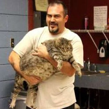 "Meatball is ""the biggest cat I have ever seen,"" said Melissa Gable of Maricopa County Animal Care and Control. (Source: Maricopa County Animal Care and Control)"