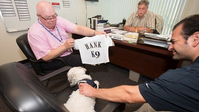 Hank has made the Milwaukee Brewers' roster and has his own jersey. (Source: Milwaukee Brewers / Facebook)