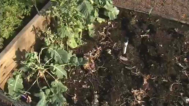 Only one row of plants was left untouched in this planter box. (Source: CBS 5 News)