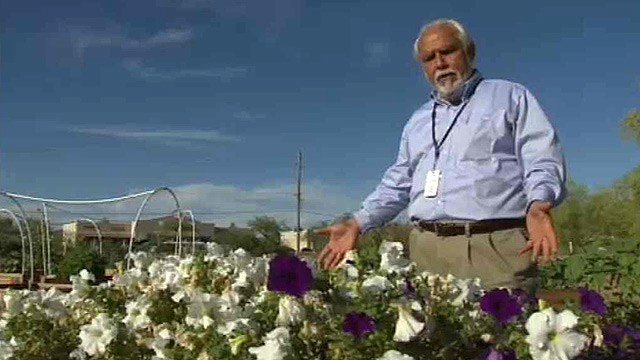"""I'm standing over an area right now where alyssum used to be,"" said Gustavo McGrew. (Source: CBS 5 News)"