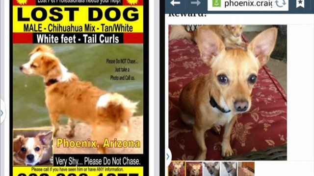 Suspect demanding ransom for lost dogs may be using ...